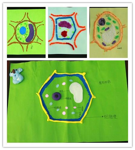 乔婷老师组织学生独立制作植物细胞三维结构模型